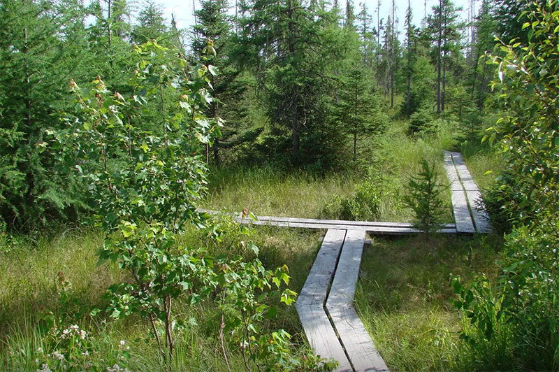 A boardwalk leads visitors through the 140-acre bog