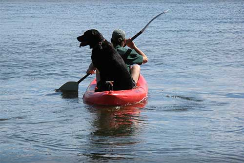 Dogs enjoy kayaking too!