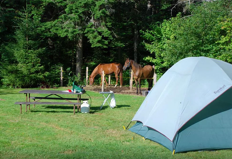 Horse camping at New Discovery State Park
